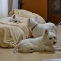 Photos: マコトさんの犬17