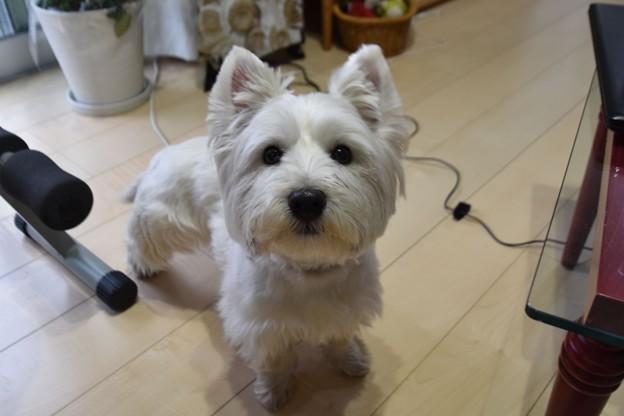 Photos: マコトさんの犬18
