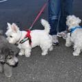 Photos: マコトさんの愛犬