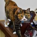 Photos: 車屋さんにいた猫