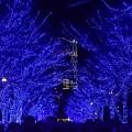 Photos: 19代々木公園青の洞窟2