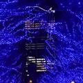 Photos: 19代々木公園青の洞窟3