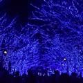 Photos: 19代々木公園青の洞窟4