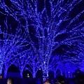 Photos: 19代々木公園青の洞窟5