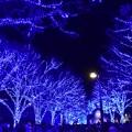 Photos: 19代々木公園青の洞窟6