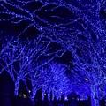Photos: 19代々木公園青の洞窟7