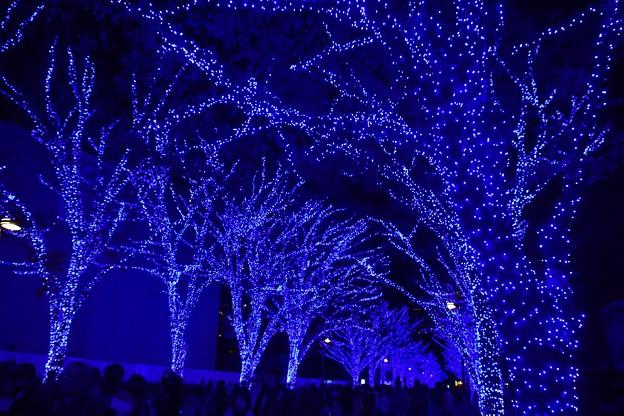 19代々木公園青の洞窟8
