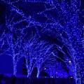 Photos: 19代々木公園青の洞窟8