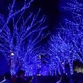 Photos: 19代々木公園青の洞窟9