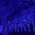 Photos: 19代々木公園青の洞窟11