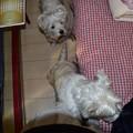 マコトさんの愛犬
