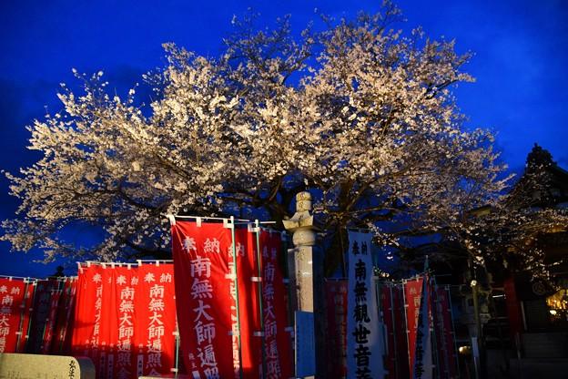 21高尾夜桜