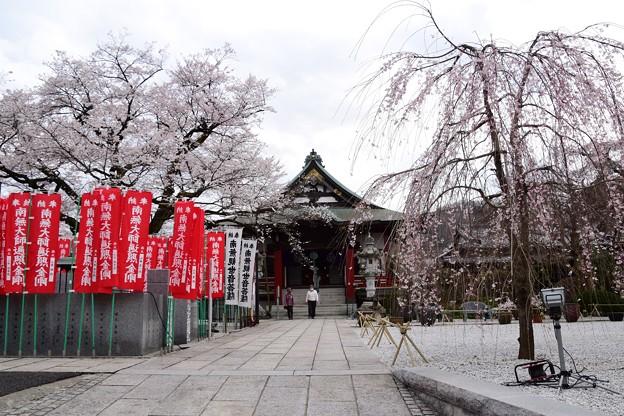 21高尾桜