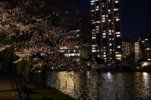 21上野公園夜桜