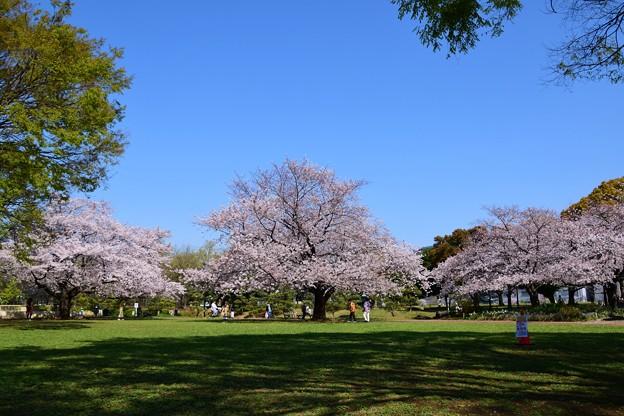 21亀戸中央公園