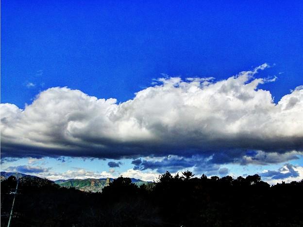 神社の森  風行雲