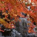 Photos: 滝と紅葉