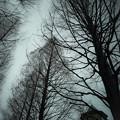 Photos: 空が狭い