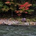 写真: 箒川