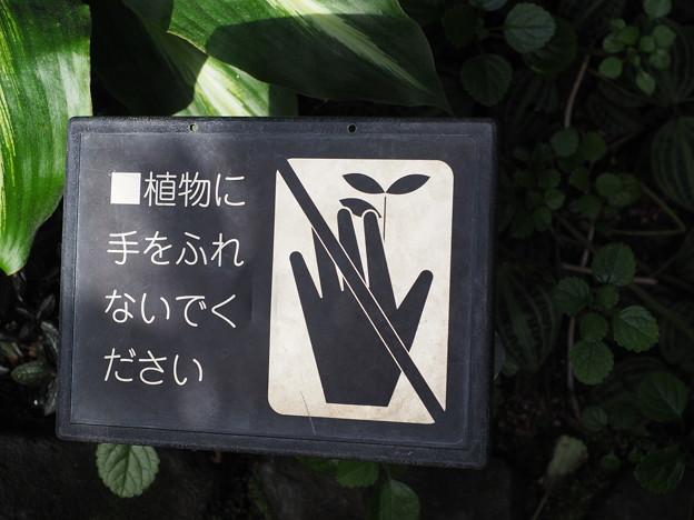 ■踊り子さんには手をふれないでください