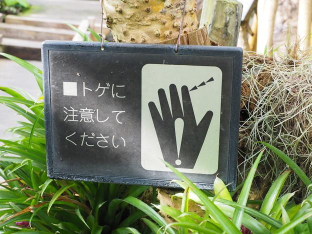 トゲに注意! (1)