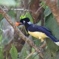 Photos: 何かを咥える鳥