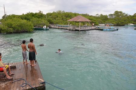 地元の少年と泳ぐガラパゴスアザラシたち