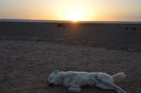ブラックデザートからの日の出、手前はノマドのペットの犬、まったく働きませんw