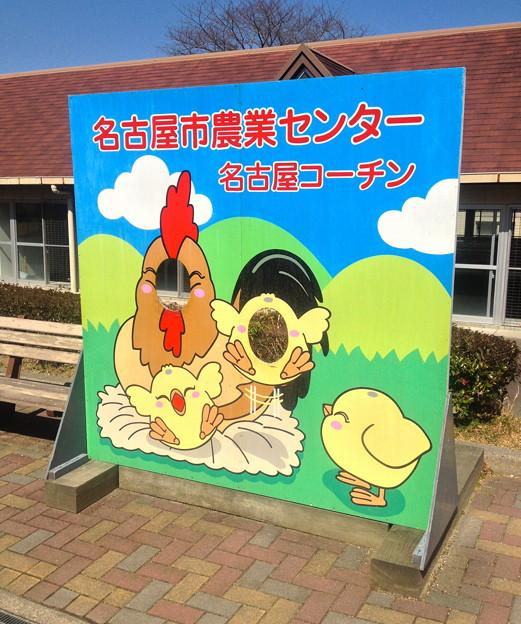 名古屋市農業センター:しだれ梅まつり - 085