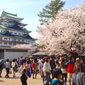 写真: 名古屋城春まつり - 055
