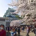 写真: 名古屋城春まつり - 058