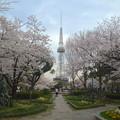 写真: 久屋大通公園の桜 - 02