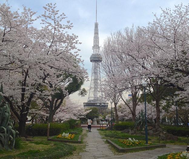 久屋大通公園の桜 - 02