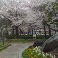 写真: 久屋大通公園の桜 - 04