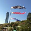 写真: 東山動植物園:上池前門 前の鯉のぼり - 3
