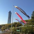 写真: 東山動植物園:上池前門 前の鯉のぼり - 5
