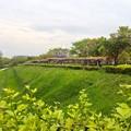 写真: 名古屋城東門前の「藤の回廊」 - 1