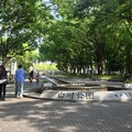 Photos: 新緑が清々しい白川公園の道 - 1