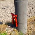 Photos: ゴミのポイ捨て防止用と思われるミニ鳥居が電信柱に! - 3