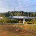 写真: 愛・地球博記念公園:観覧車内から見たリニモ