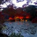 写真: 東山植物園 紅葉ライトアップ 2013 No - 017