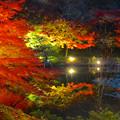 写真: 東山植物園 紅葉ライトアップ 2013 No - 021