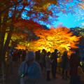写真: 東山植物園 紅葉ライトアップ 2013 No - 035