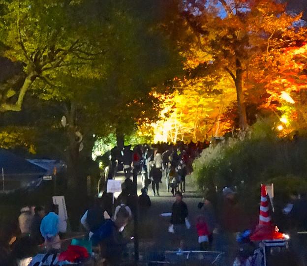 写真: 東山植物園 紅葉ライトアップ 2013 No - 038