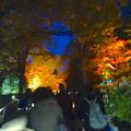 写真: 東山植物園 紅葉ライトアップ 2013 No - 039