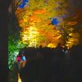 写真: 東山植物園 紅葉ライトアップ 2013 No - 040
