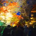 写真: 東山植物園 紅葉ライトアップ 2013 No - 041