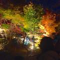 写真: 東山植物園 紅葉ライトアップ 2013 No - 064