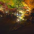 写真: 東山植物園 紅葉ライトアップ 2013 No - 065