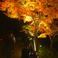 写真: 東山植物園 紅葉ライトアップ 2013 No - 090